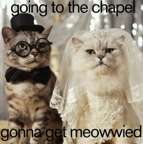 cat wedding photo