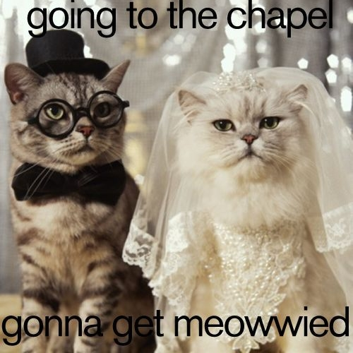 cropped-cat-wedding-photo